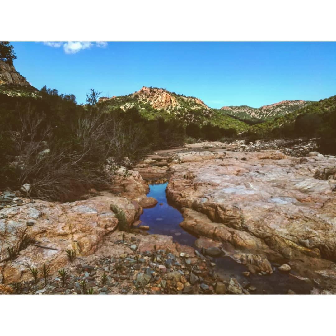 Monte Arcosu_9